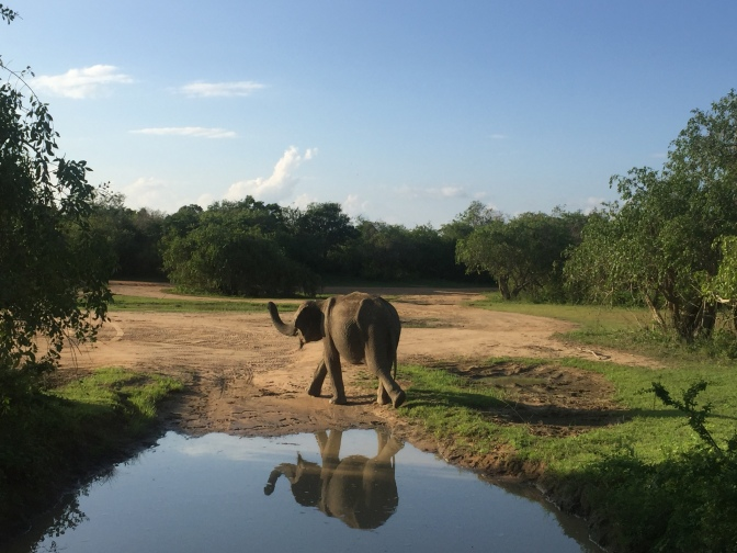 Een 'Freek Vonkje' doen in Sri Lanka